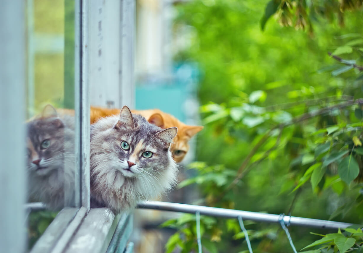 katzenfensterschutz das fenster katzensicher machen. Black Bedroom Furniture Sets. Home Design Ideas