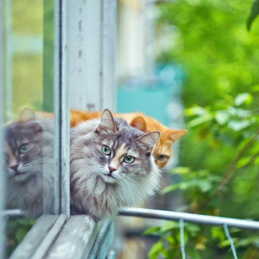 Katzenfensterschutz