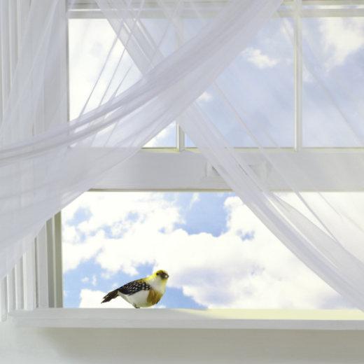 Vogel fliegt gegen Fenster