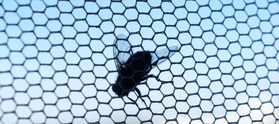 Insektenschutz Fliege