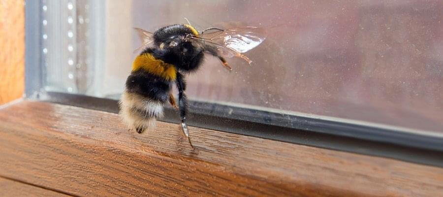 Hervorragend Bienen und Wespen im Fensterrahmen » Ursachen & Abhilfe PC16